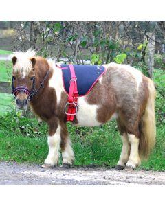 Bare Back Pad Unicorn, Shetty